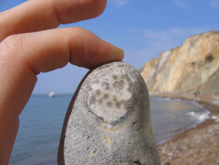 Fossil underside of an irregular flint echinoid at Alum Bay