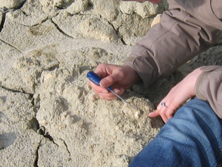 Close-up of fossil extraction at Alum Bay