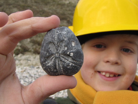 Internal flint mould of a Micraster echinoid at Beachy Head
