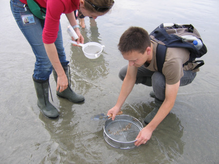 Robert Randell sieves fossils at Bracklesham Bay