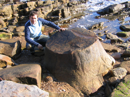Roy Shepherd examines a fossilised tree at Crail in Scotland