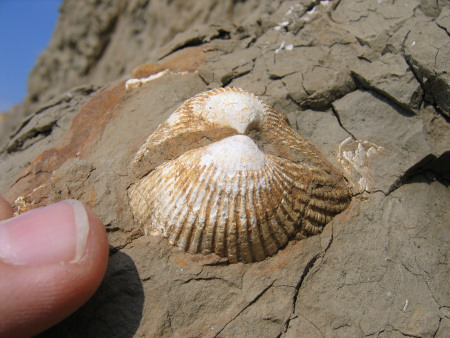 DISCOVERING FOSSILS | Fossil hunting guide