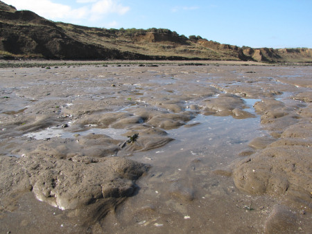 London Clay exposed on the foreshore at Warden Point