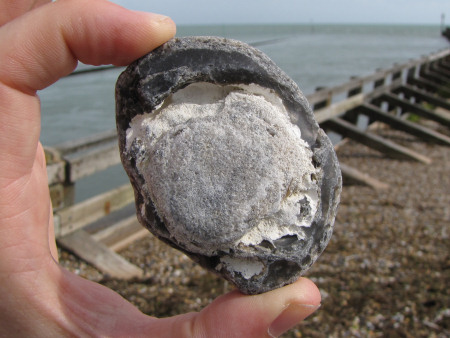 Fossil sponge in a flint pebble at Littlehampton