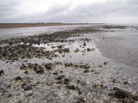 Flint and chalk pebble reef between Littlehampton and Climping