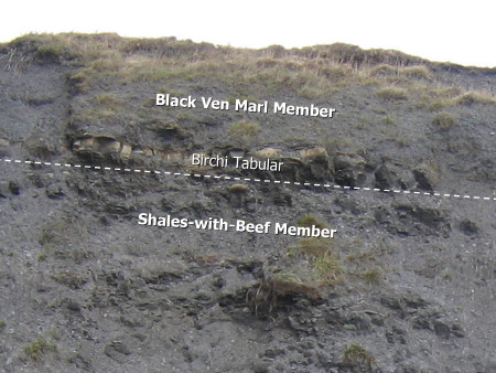 Geology diagram of Black Ven Marl Member, Birchi Tabular and Shales-with-Beef Member