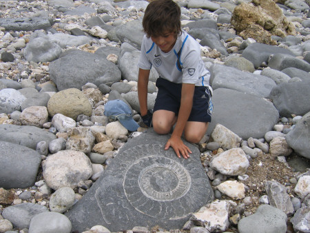 Fossil Paracoroniceras ammonite at Monmouth Beach