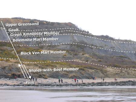 Various geological horizons in the cliffs at Black Ven near Lyme Regis