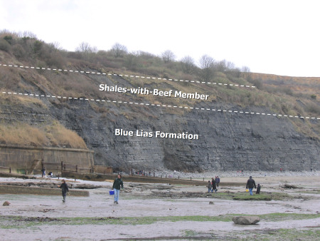 Geology diagram showing Shales with Beef Member and Blue Lias Formation at Lyme Regis
