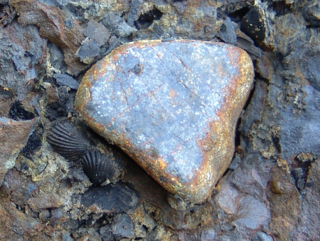An isolated beach pebble and two associated fossil brachiopods at Marloes Sands