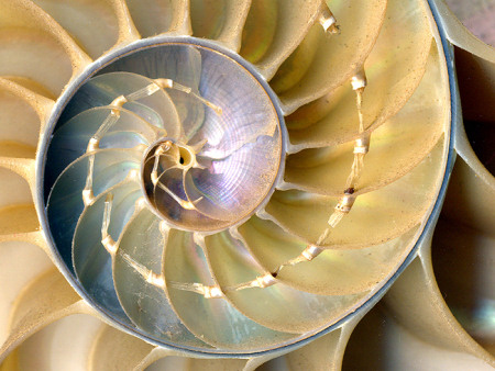 Internal chambers of a nautilus shell