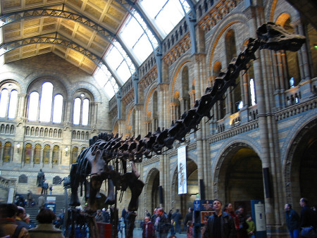 Diplodocus skeleton at The Natural History Museum in London
