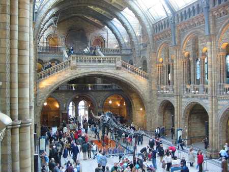 Inside the Natural History Museum London