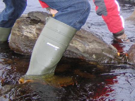 Fossil hunting in wellies in the River Brora