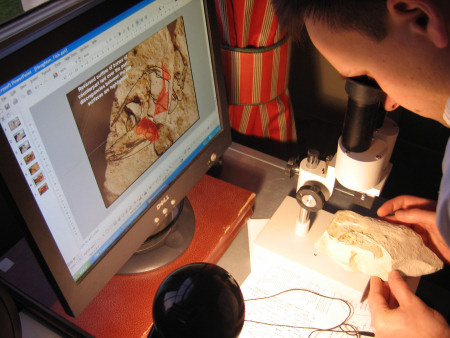 Robert Randell examining a chalk fossil fish under the microscope