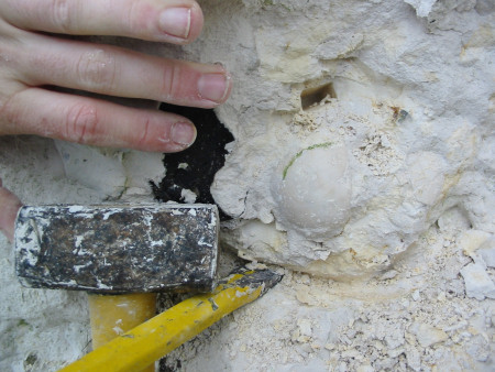 Fossil Echinocorys echinoid with hammer and chisel at Seaford Head