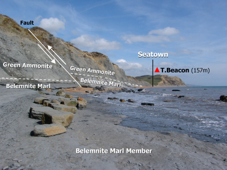 The Belemnite Marl Member exposed on the foreshore and in the cliff at Seatown