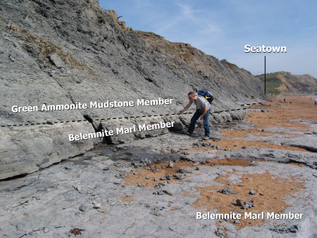 Searching for fossils in the Belemnite Marl Member at Seatown