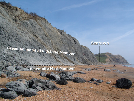 Geology diagram of cliffs at Seatown showing Green Ammonite Mudstone Member