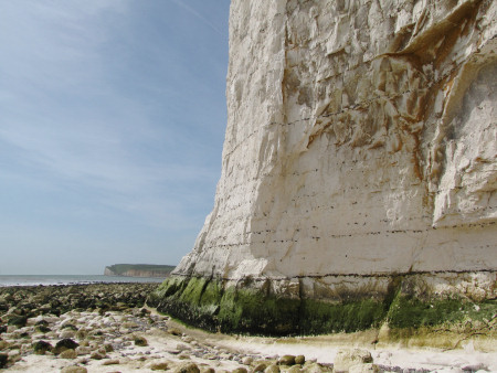 Seven Sisters Flint Band within the chalk cliff beneath Short Brow