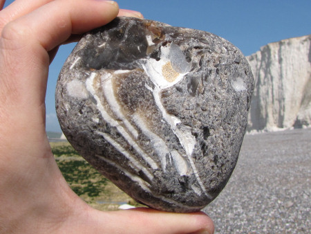 Flint pebble containing fragments of fossilised inoceramid bivalves at Seven Sisters