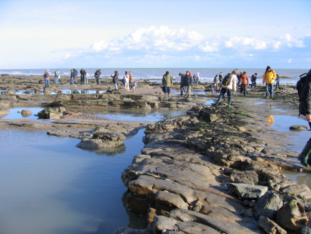 Fossil hunters searching for dinosaur footprints on the foreshore at Fairlight