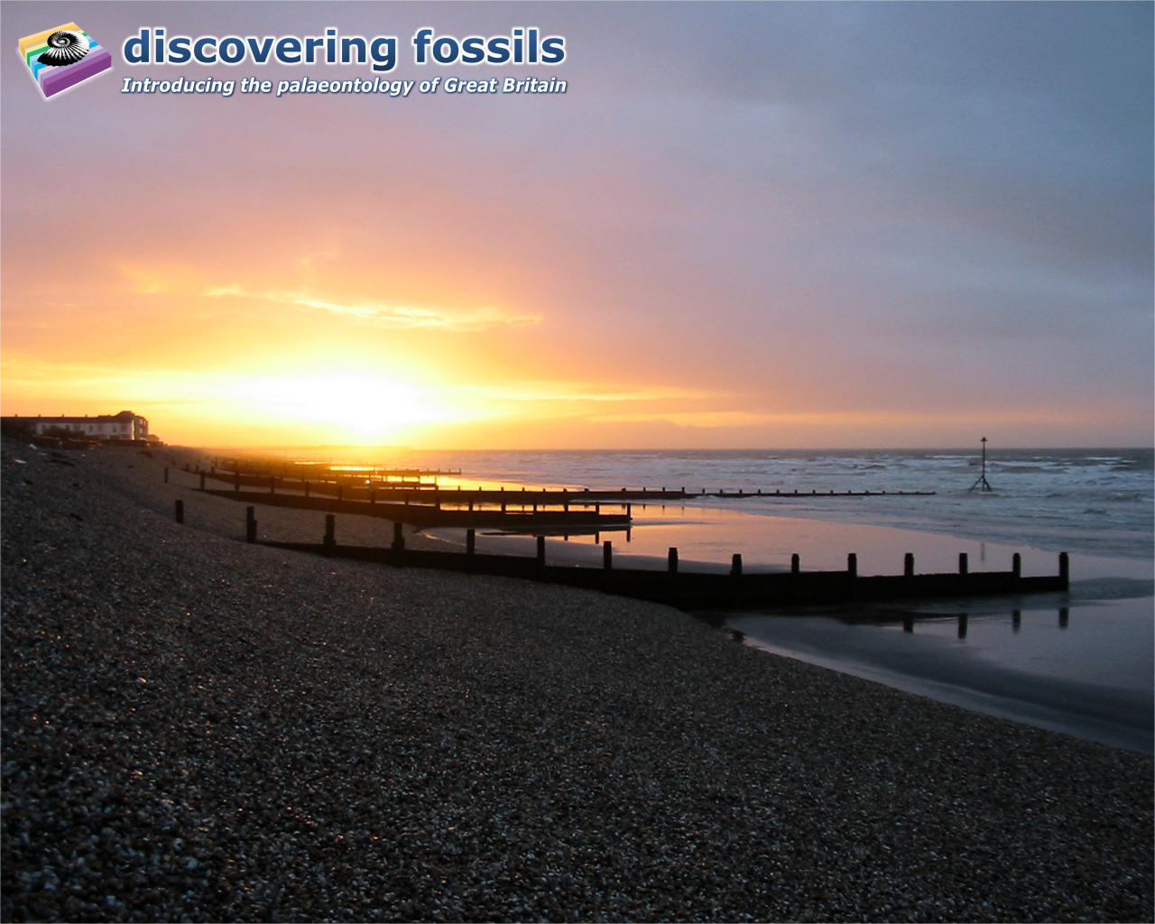 discovering fossils | desktop wallpapers
