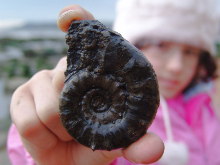 Pryitised ammonite from Charmouth
