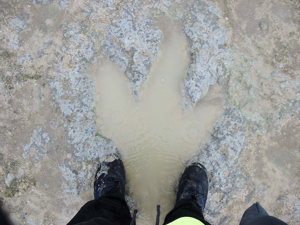 Ardley quarry Megalosaurus dinosaur footprint