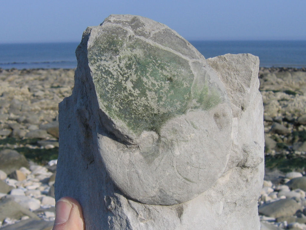 Beachy Head fossil ammonite