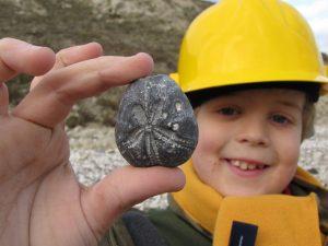 Beachy Head fossil echinoid