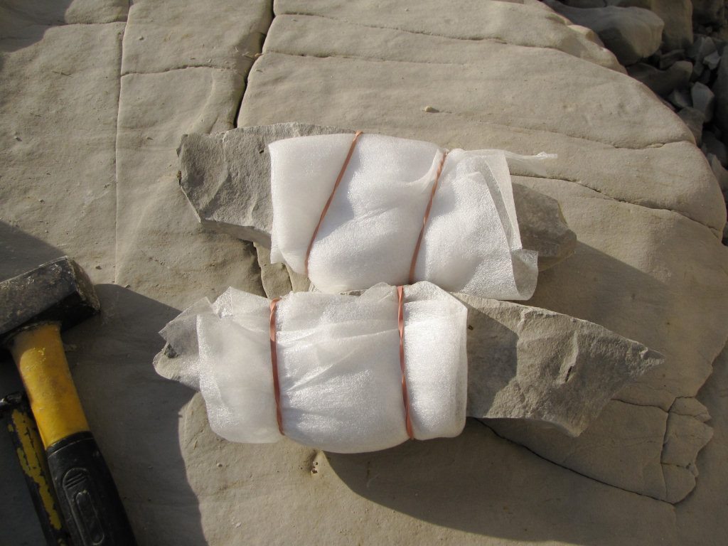 Foam wrapped fossil
