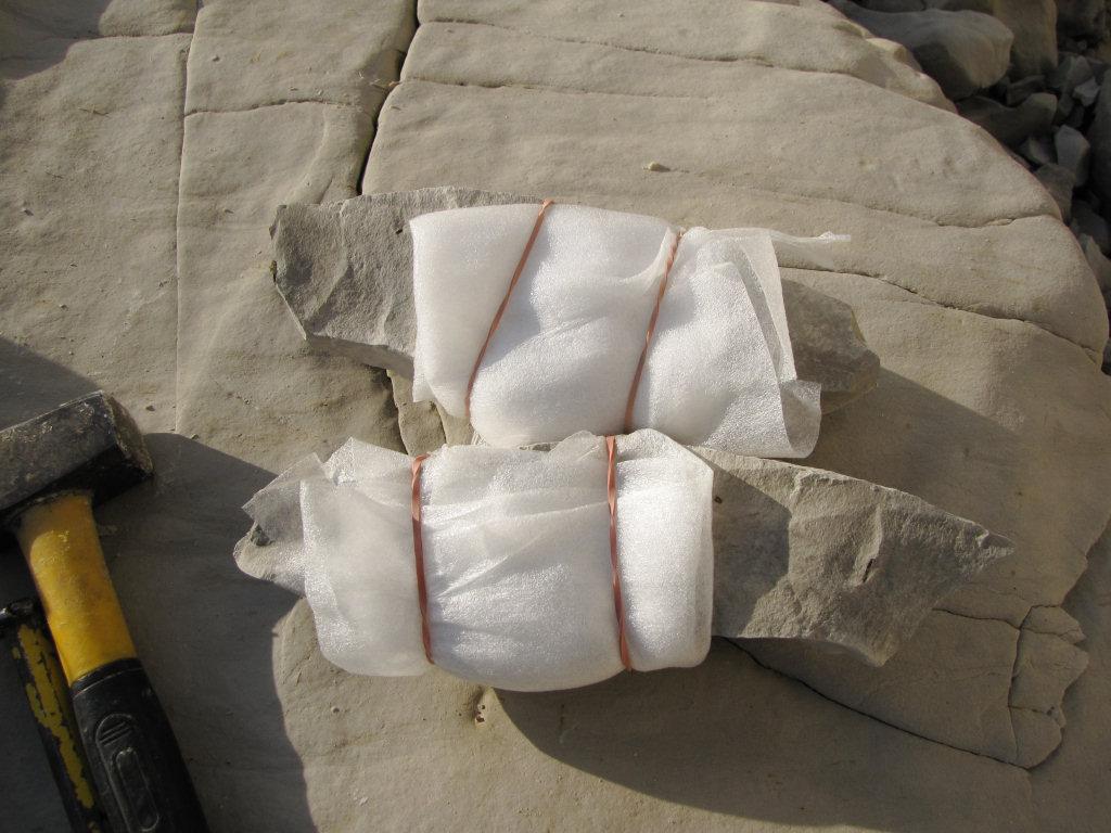 Foam wrapped fossil