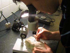 Fossil preparation microscope