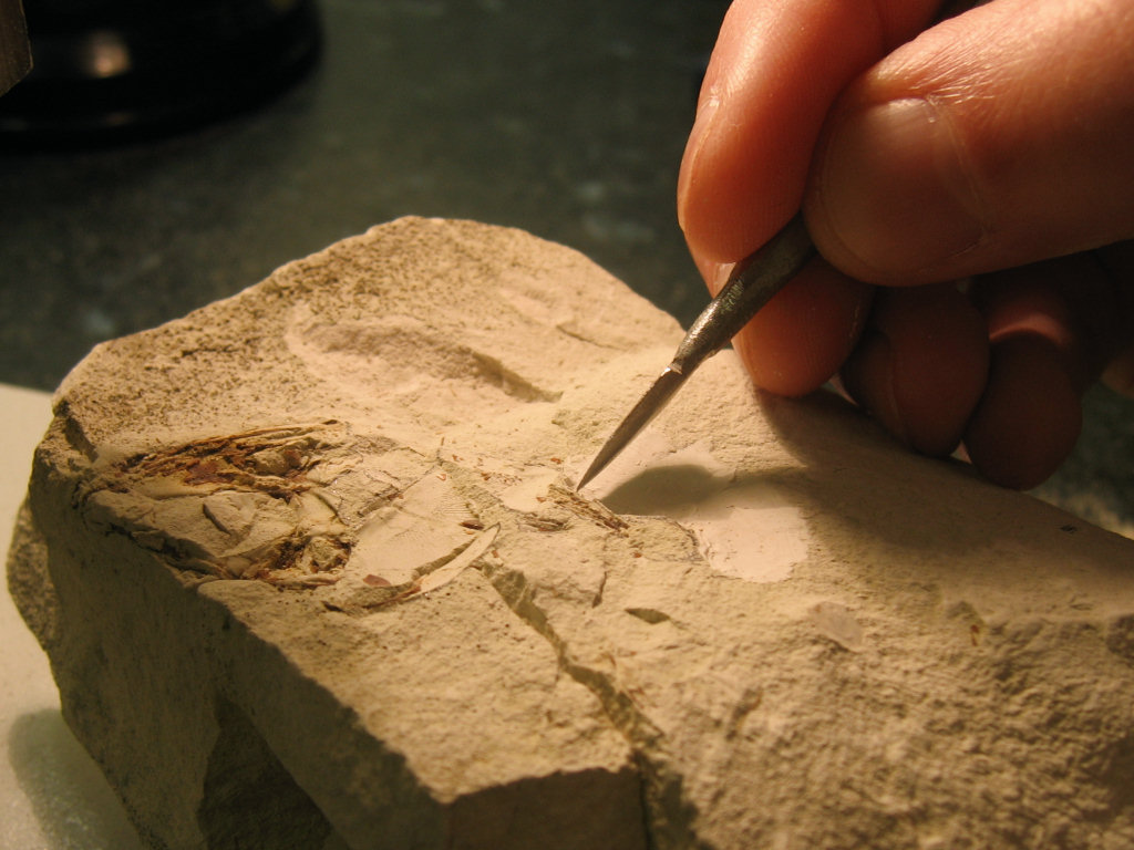 Fossil preparation spear-shaped dental tool