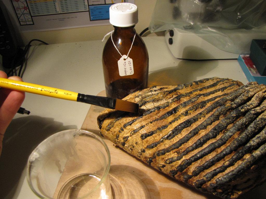 Fossil preparation thin paraloid B72