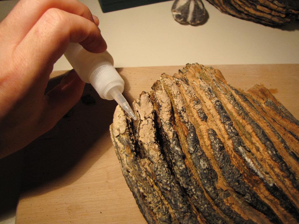 Fossil preparation thin superglue