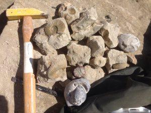 Public Fossil Hunt at Beachy Head