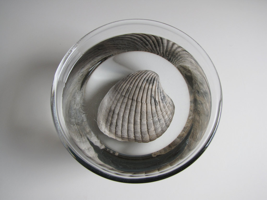 Soaking fossils in fresh water