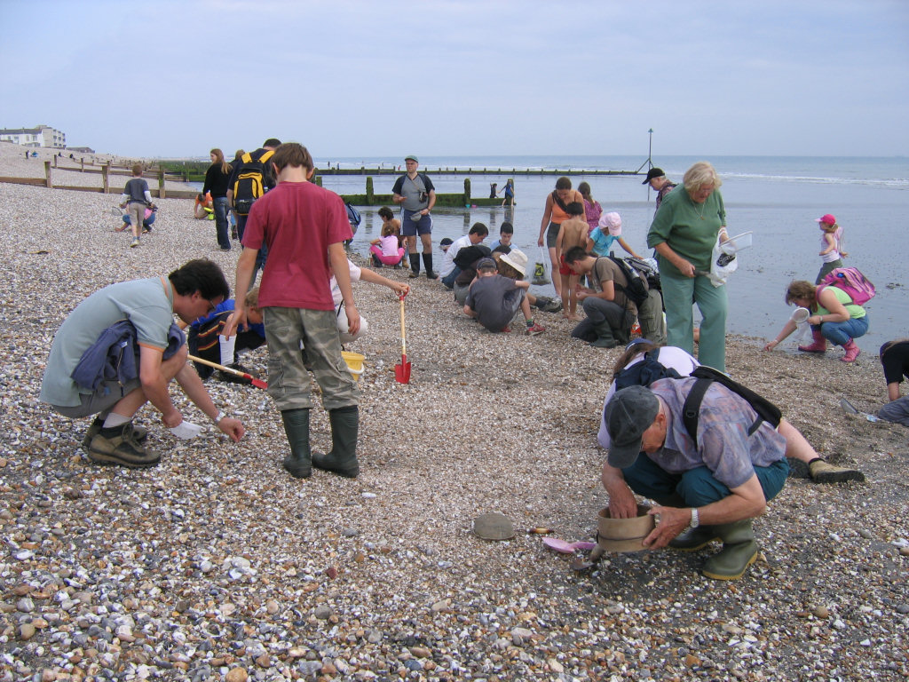 Bracklesham Bay fossil hunting