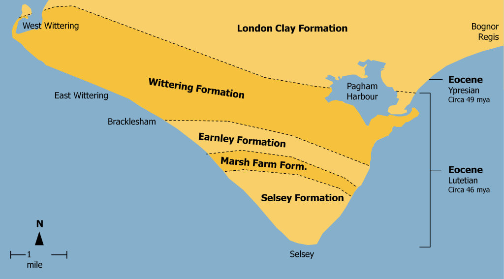 Bracklesham Bay geology