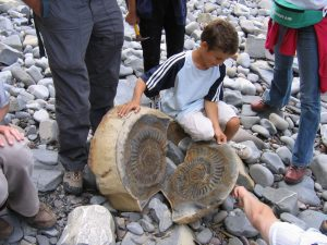 What is a fossil ammonite