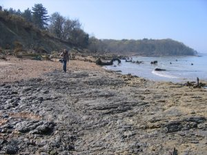 Bouldnor fossil hunting