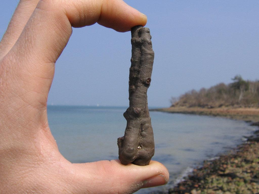 Bouldnor fossil twig