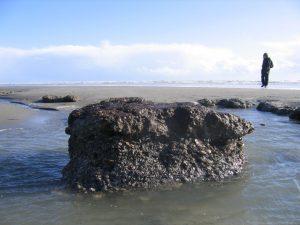 Bracklesham Bay exposure