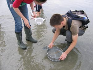 Bracklesham Bay fossil hunting