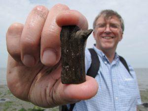 Herne Bay fossil twig