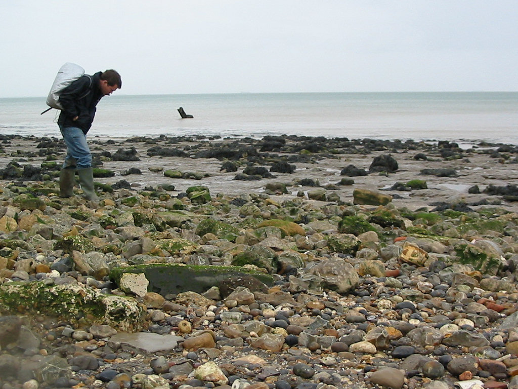 Isle of Sheppey fossil hunting