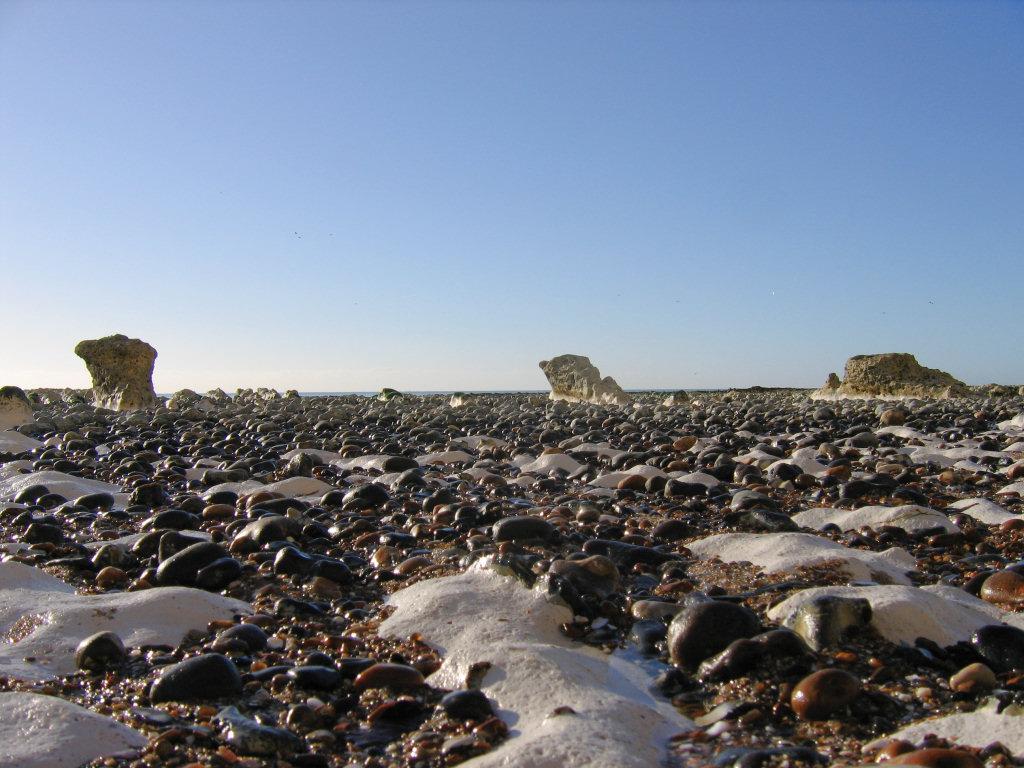 Peacehaven parapuzosia ammonites
