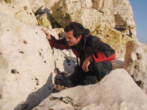 Seaford Head fossils on chalk boulders